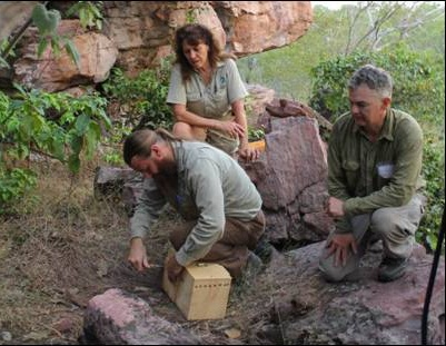 Conservation of the Quoll