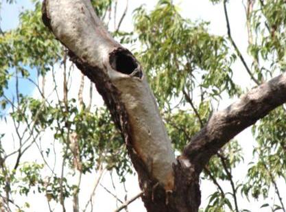 Nesting hollow